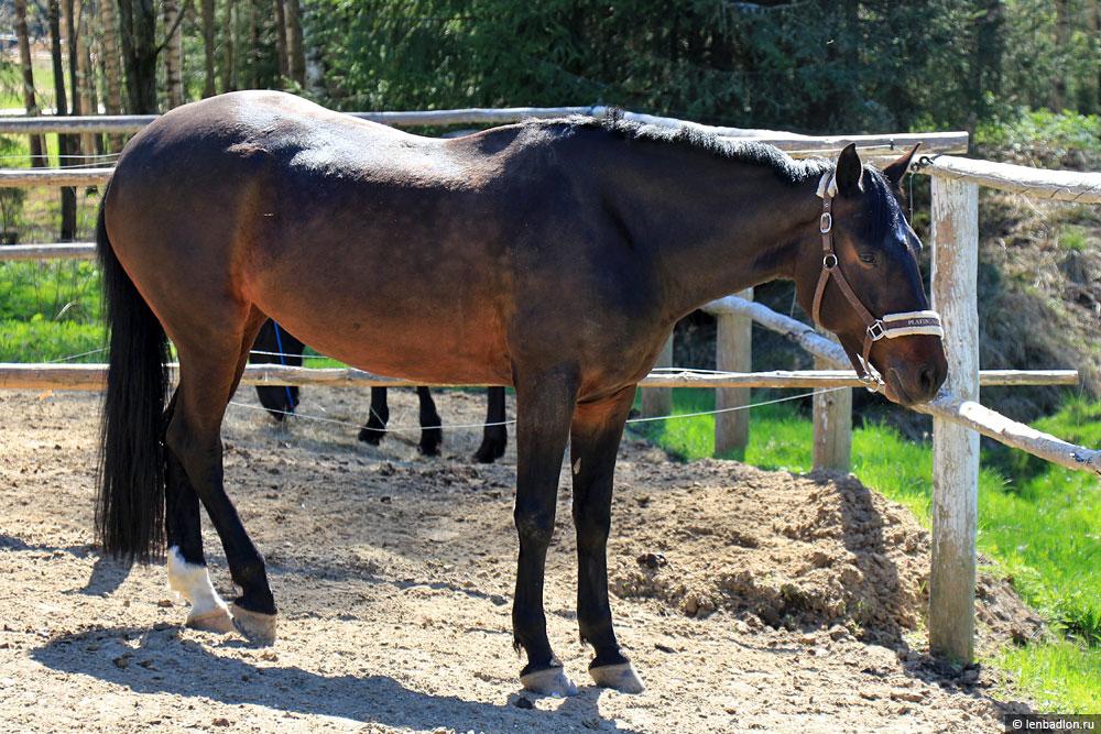 Фото лошадки в Зубровнике в Токсово