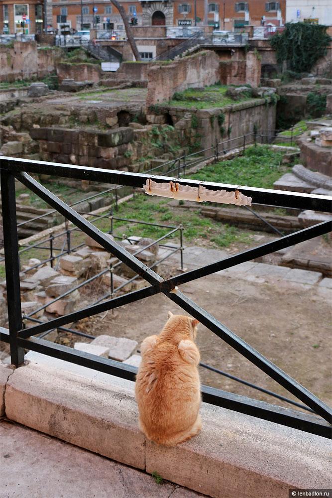 Фото кошки в Риме
