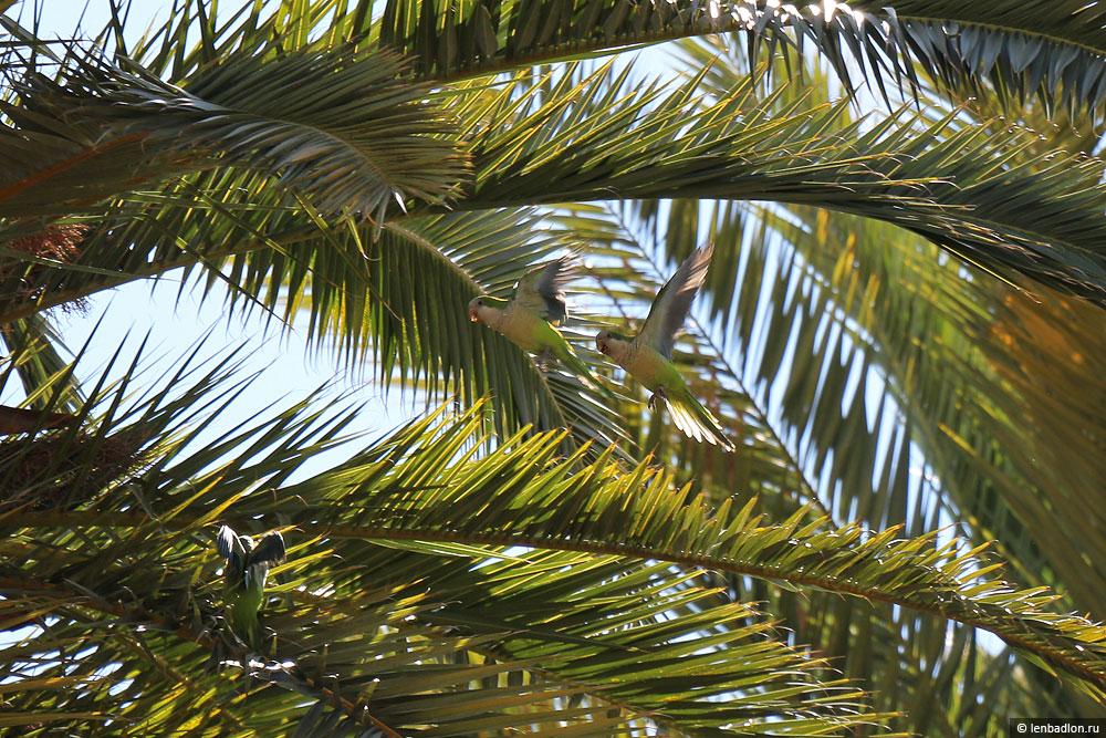 Фото попугая в Малаге